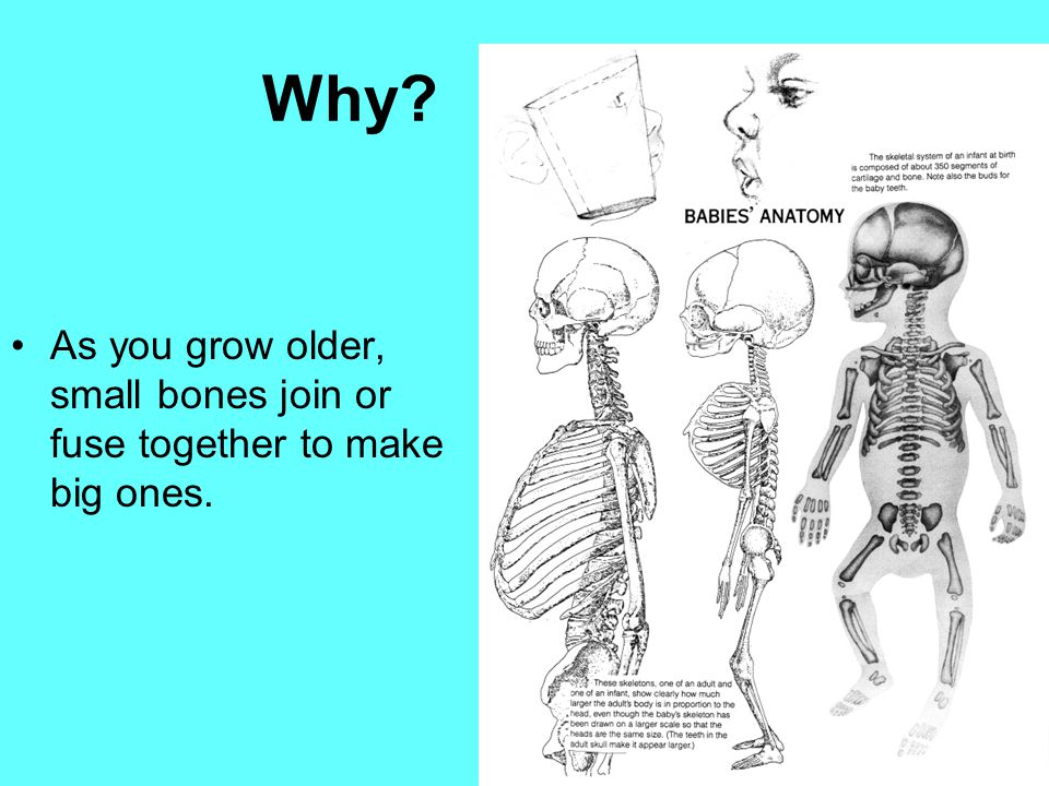 Why As you grow older, small bones join or fuse together to make big ones.