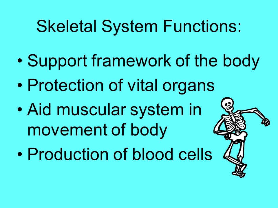Skeletal System Functions: