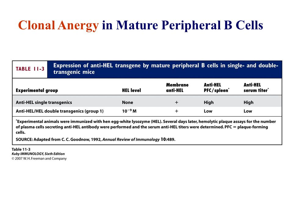 Clonal Anergy in Mature Peripheral B Cells