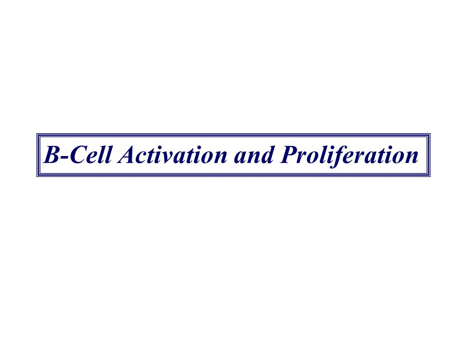 B-Cell Activation and Proliferation