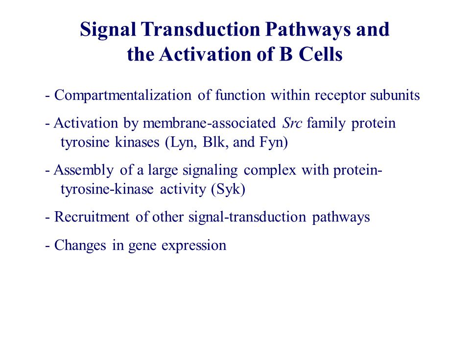 Signal Transduction Pathways and the Activation of B Cells