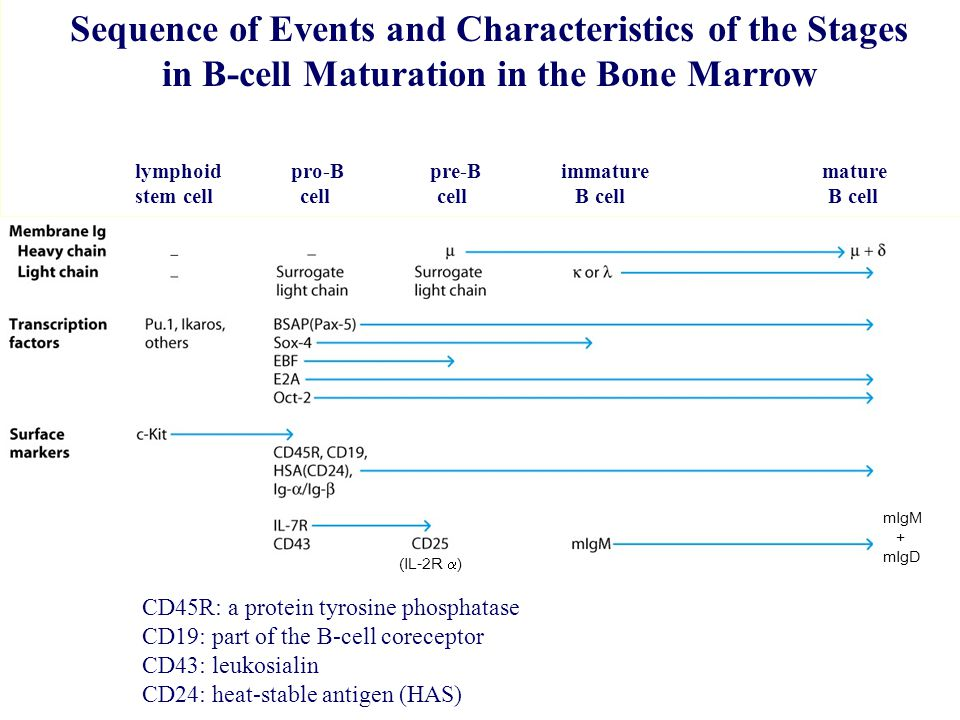 Sequence of Events and Characteristics of the Stages