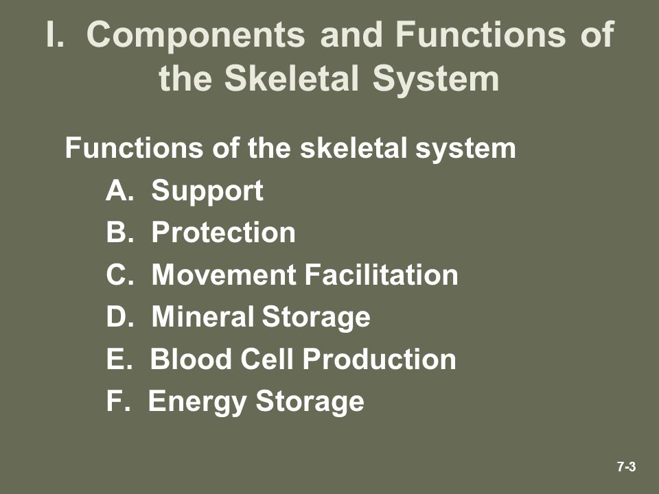I. Components and Functions of the Skeletal System