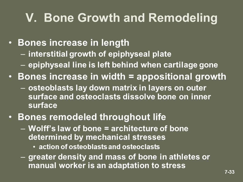 V. Bone Growth and Remodeling