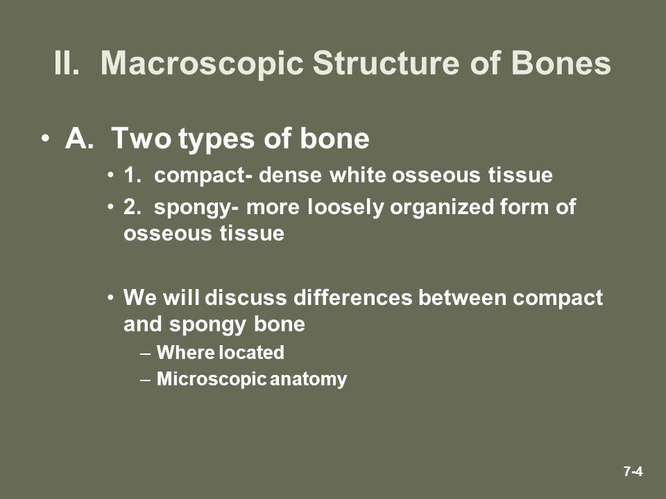 II. Macroscopic Structure of Bones