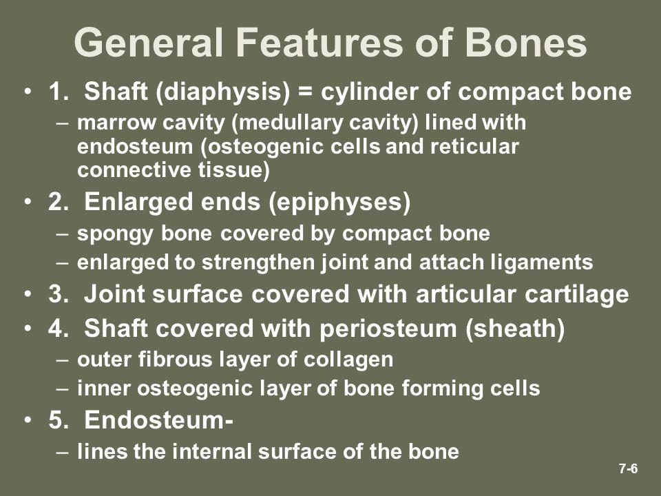 General Features of Bones