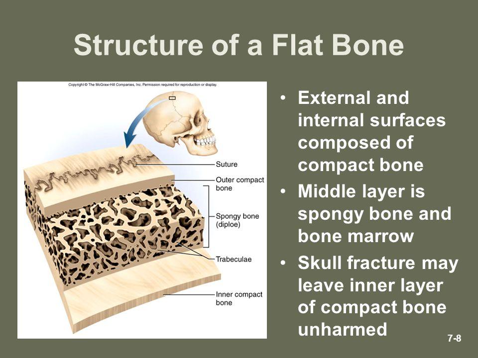 Structure of a Flat Bone