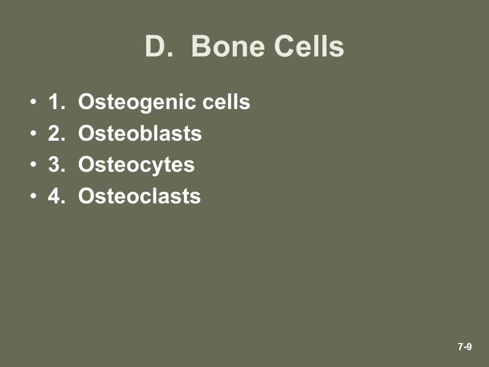 D. Bone Cells 1. Osteogenic cells 2. Osteoblasts 3. Osteocytes