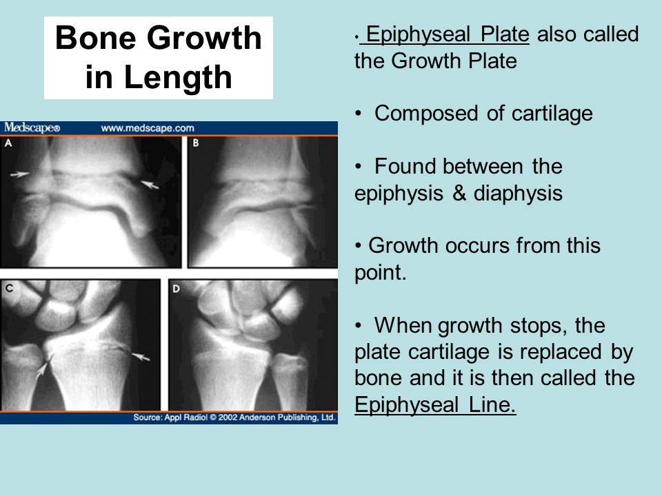 Bone Growth in Length Composed of cartilage