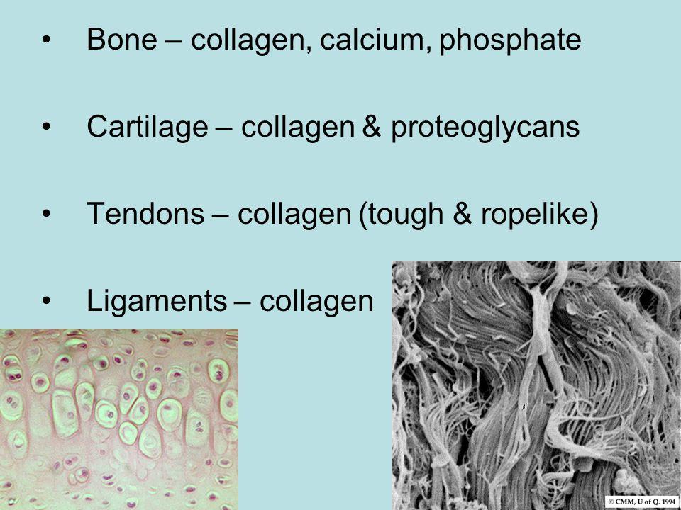 Bone – collagen, calcium, phosphate