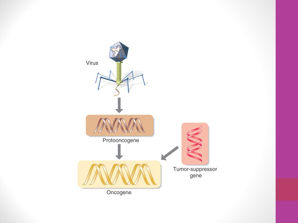 A protooncogene (normal gene that has potential to transform itself into oncogene) normally regulates cellular growth and development.