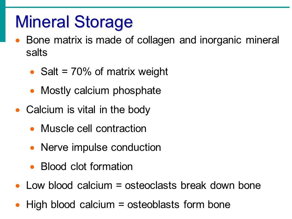Mineral Storage Bone matrix is made of collagen and inorganic mineral salts. Salt = 70% of matrix weight.