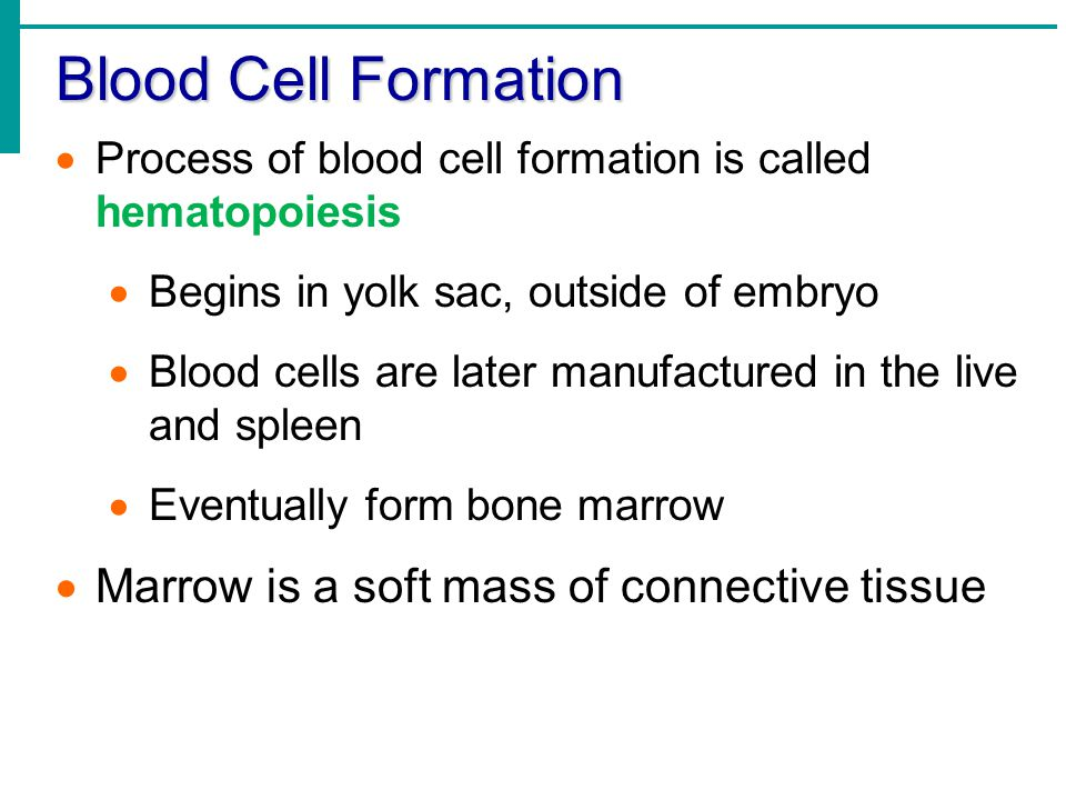 Blood Cell Formation Marrow is a soft mass of connective tissue