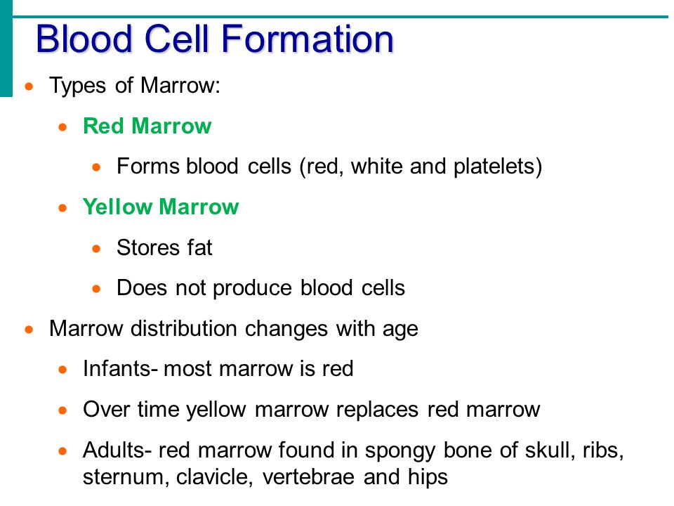 effect of bone marrow composition changes with age Aging bone marrow mesenchymal stromal cells have al- adverse effect on the proliferation and and the changes in lipid composition during the expansion have.