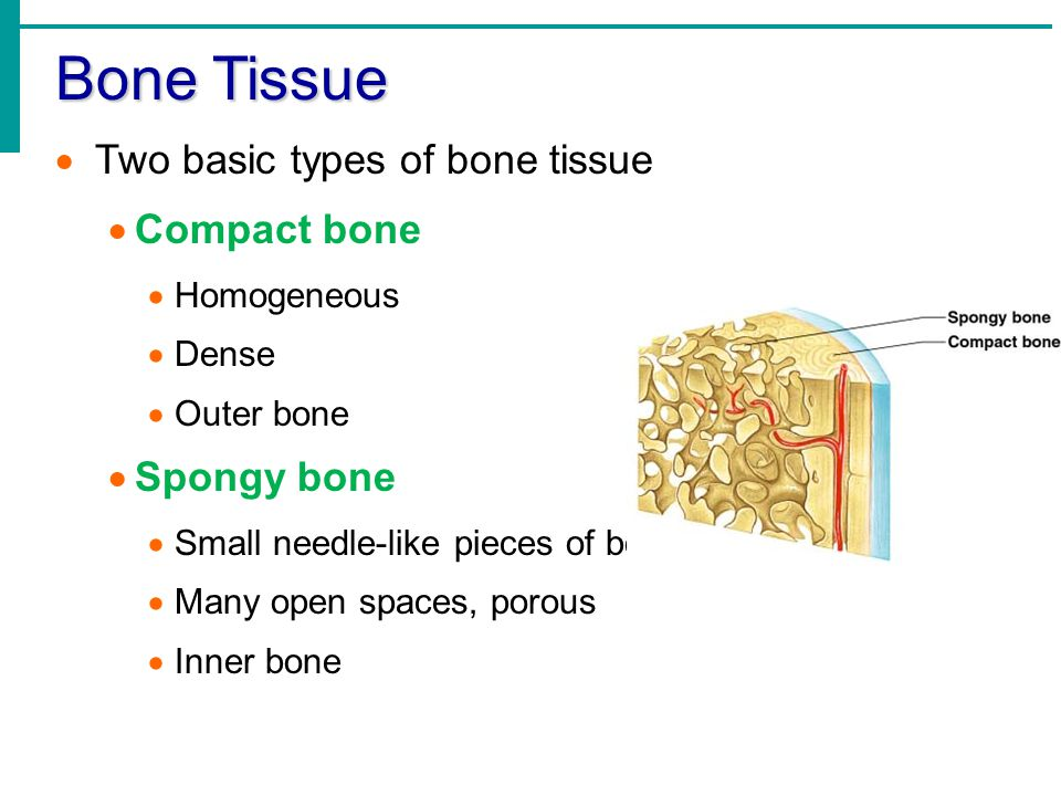 module 04 ct bone tissue2 Module 1 confirmation test review answers (ct review module 1) microsoft word - module 1 ct reviewdocx author: jwlamb.