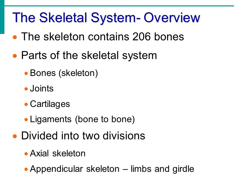 The Skeletal System- Overview