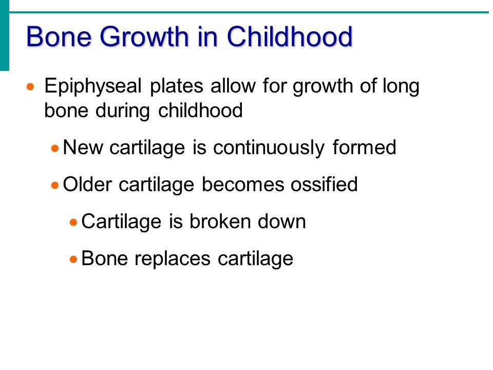 Bone Growth in Childhood