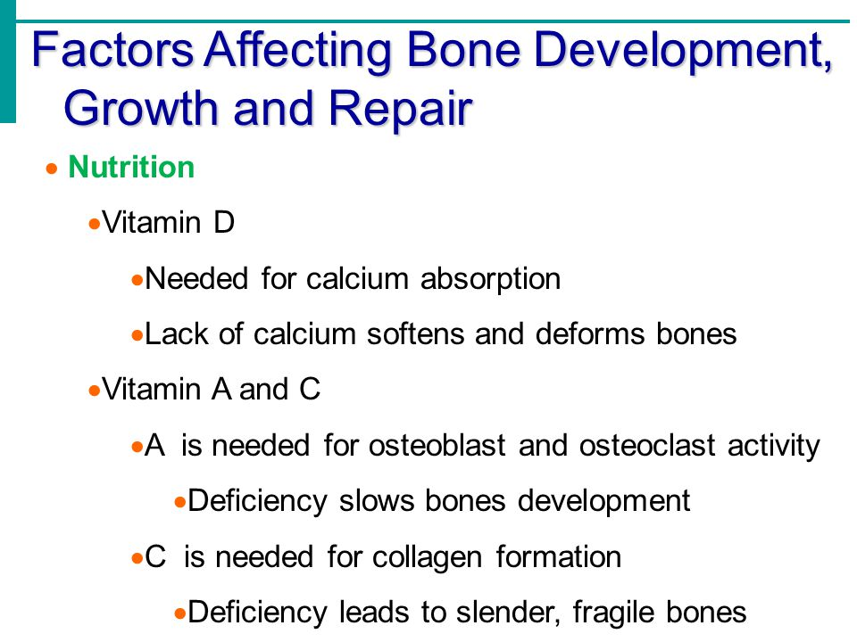 Lecture 1- Bone Structure, Formation and Growth