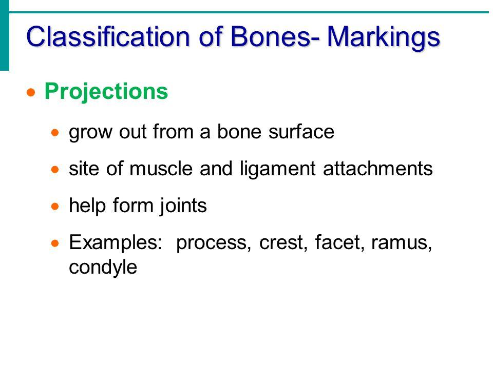 Classification of Bones- Markings