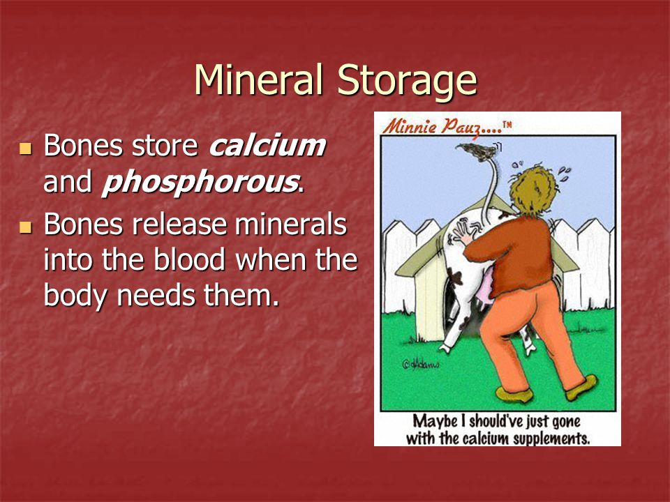Mineral Storage Bones store calcium and phosphorous.