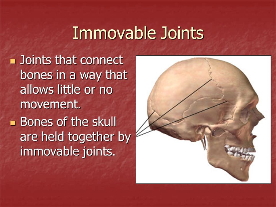 Immovable Joints Joints that connect bones in a way that allows little or no movement.