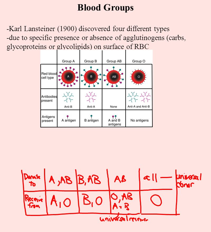 Blood Groups -Karl Lansteiner (1900) discovered four different types