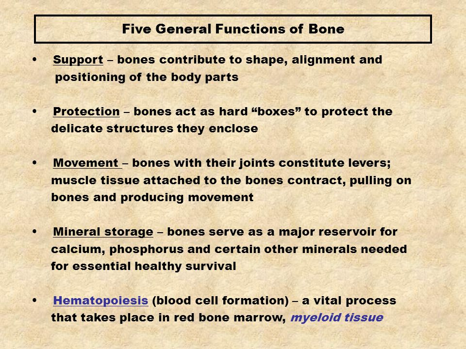 Five General Functions of Bone