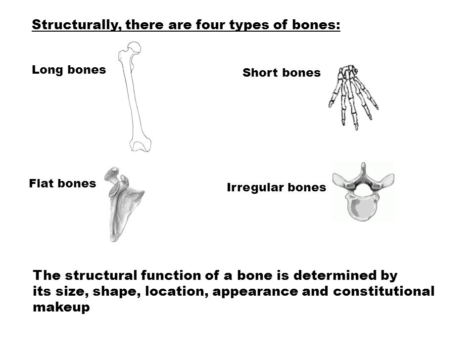 Structurally, there are four types of bones: