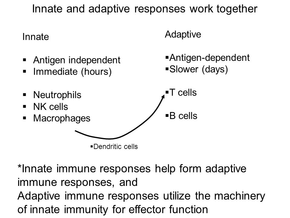 Innate and adaptive responses work together