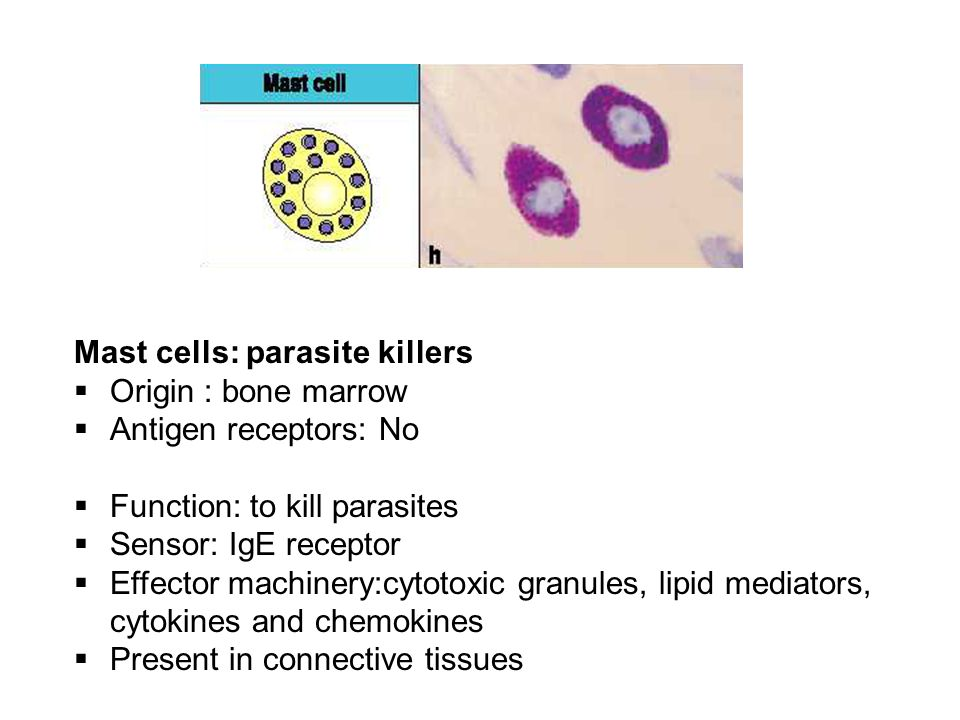 Mast cells: parasite killers