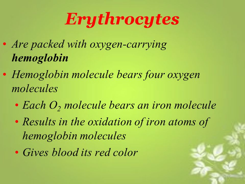 Erythrocytes Are packed with oxygen-carrying hemoglobin