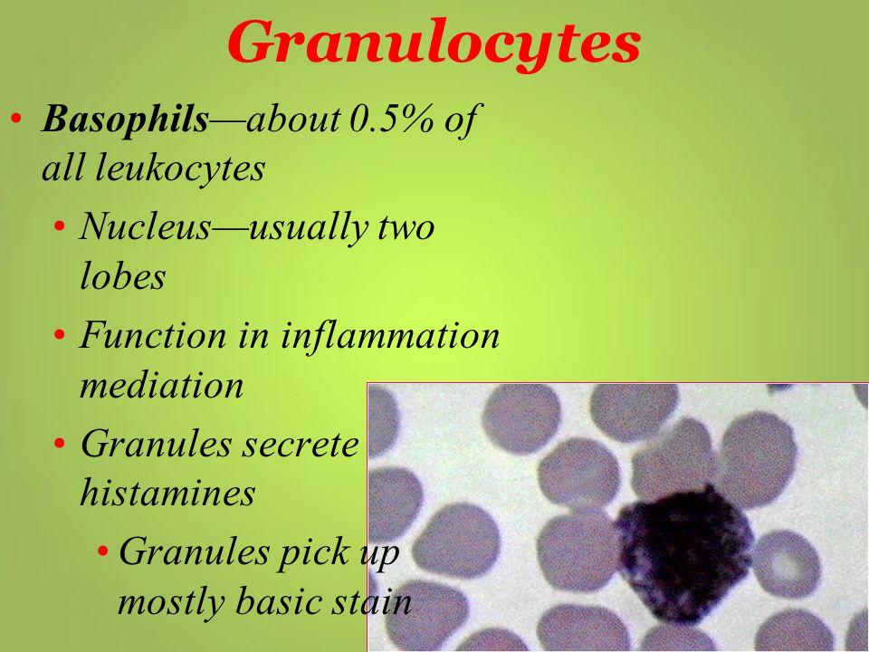 Granulocytes Basophils—about 0.5% of all leukocytes