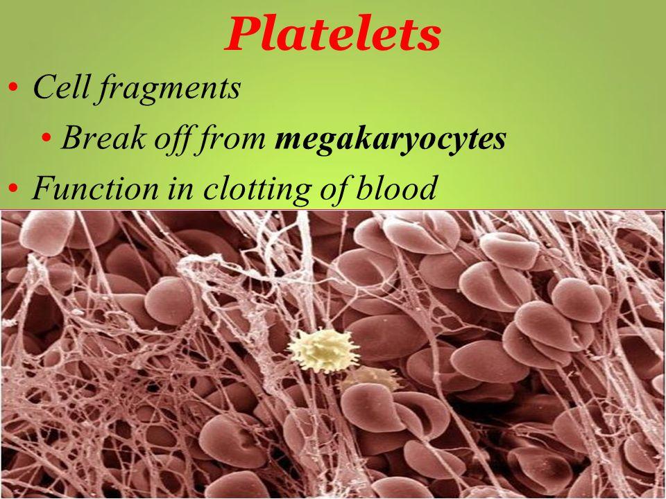 Platelets Cell fragments Break off from megakaryocytes