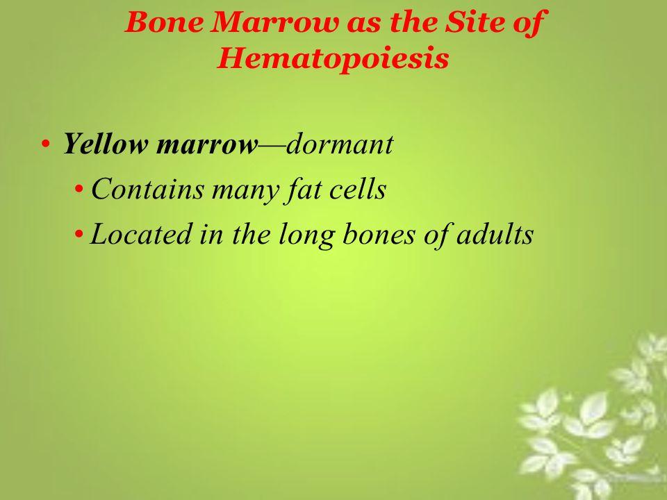 Bone Marrow as the Site of Hematopoiesis