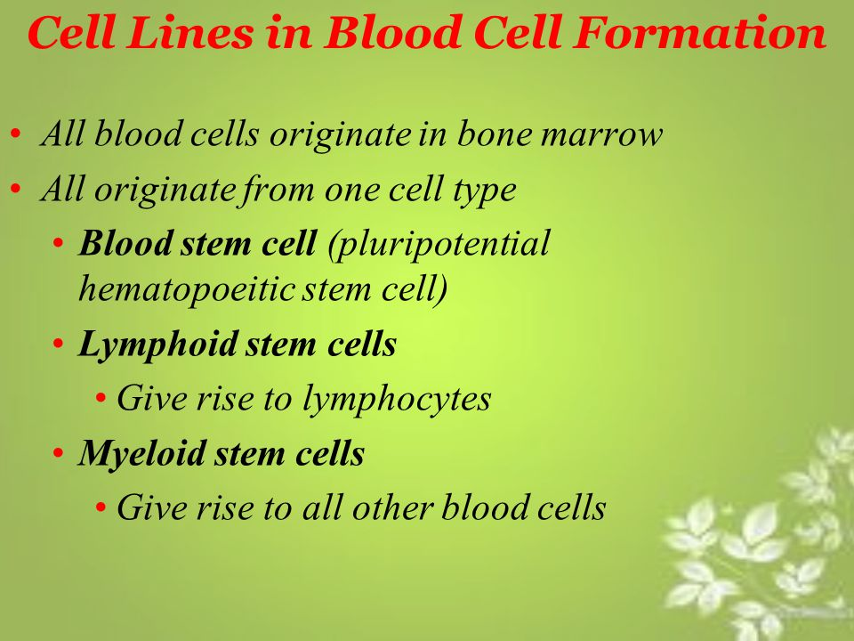 Cell Lines in Blood Cell Formation