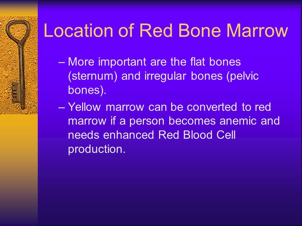 Location of Red Bone Marrow