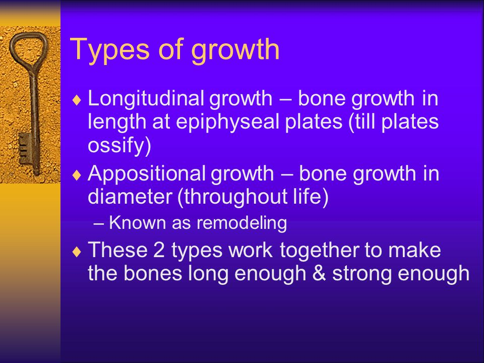 Types of growth Longitudinal growth – bone growth in length at epiphyseal plates (till plates ossify)