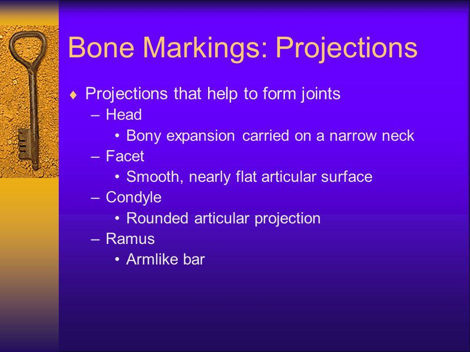Bone Markings: Projections