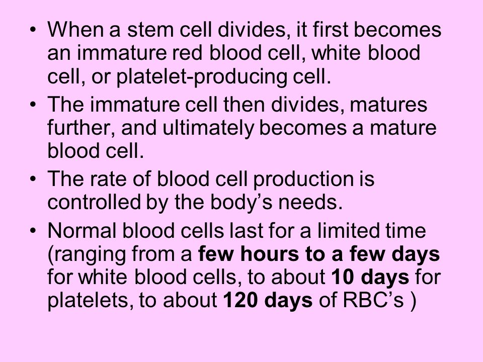 When a stem cell divides, it first becomes an immature red blood cell, white blood cell, or platelet-producing cell.