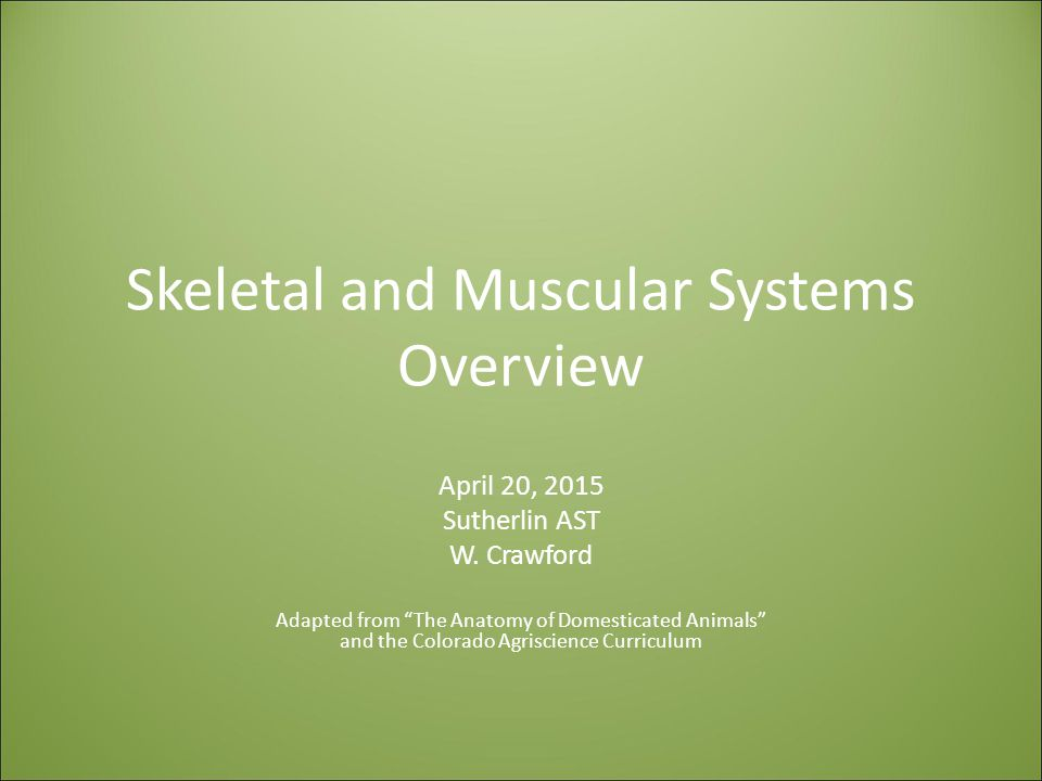 Skeletal and Muscular Systems Overview