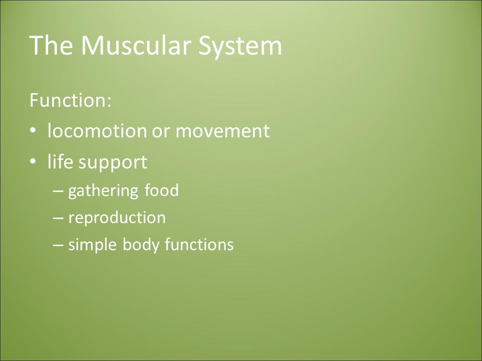 The Muscular System Function: locomotion or movement life support