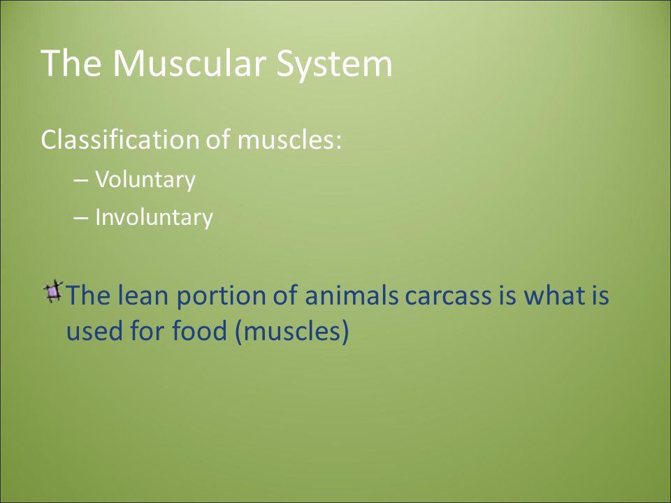 The Muscular System Classification of muscles: