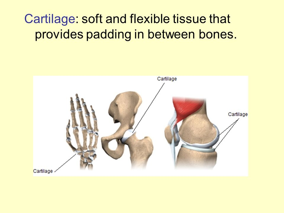 Cartilage: soft and flexible tissue that provides padding in between bones.