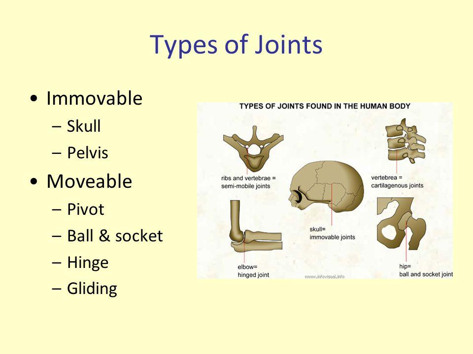 Types of Joints Immovable Moveable Skull Pelvis Pivot Ball & socket