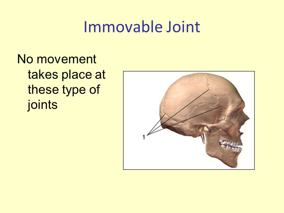 Immovable Joint No movement takes place at these type of joints