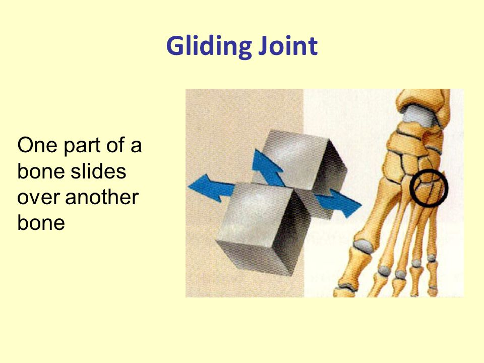 Gliding Joint One part of a bone slides over another bone