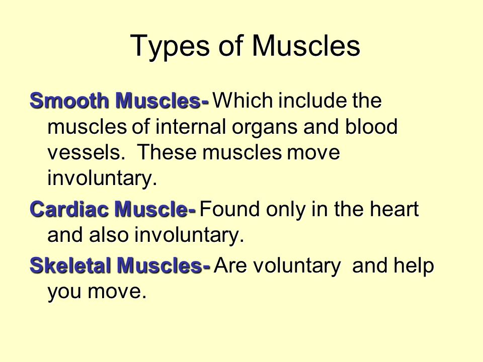 Types of Muscles Smooth Muscles- Which include the muscles of internal organs and blood vessels. These muscles move involuntary.