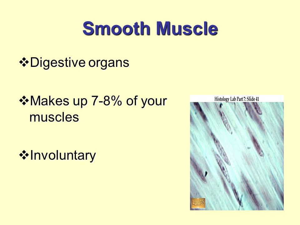 Smooth Muscle Digestive organs Makes up 7-8% of your muscles