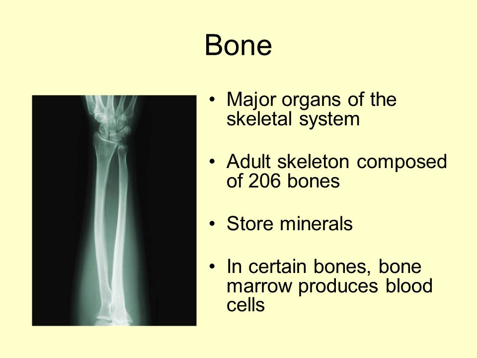 Bone Major organs of the skeletal system