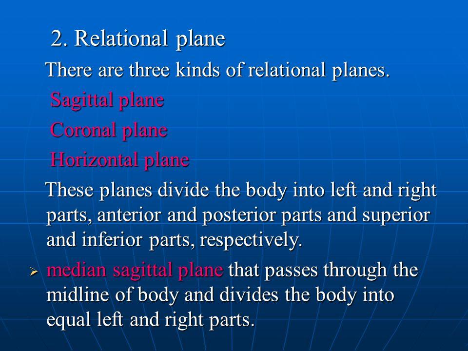 2. Relational plane Sagittal plane Coronal plane Horizontal plane